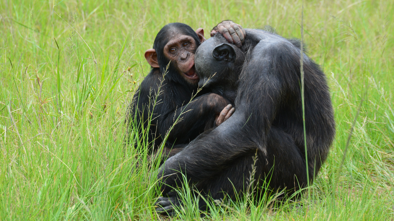 Chimp Eden | The Jane Goodall Institute South Africa